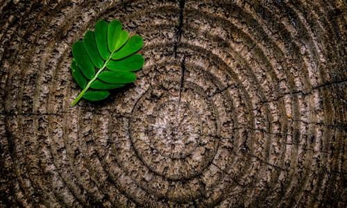 green leaf copy 2_500x300